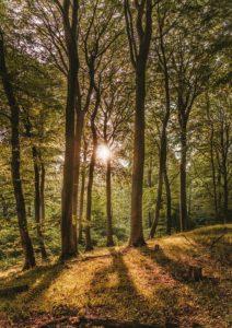 Waldlichtung Friedwald moderne Bestattungsform
